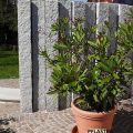 granitmauer-natursteinpflaster